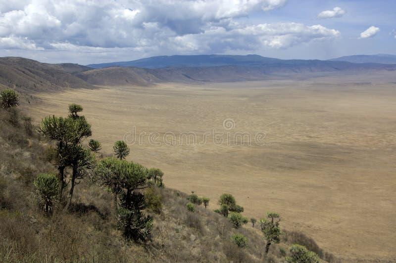Vista na cratera de Ngorongoro, Tanzânia imagem de stock royalty free