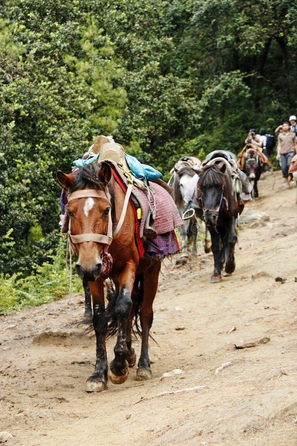 A vista na fuga ao monastério de Taktsang foto de stock royalty free