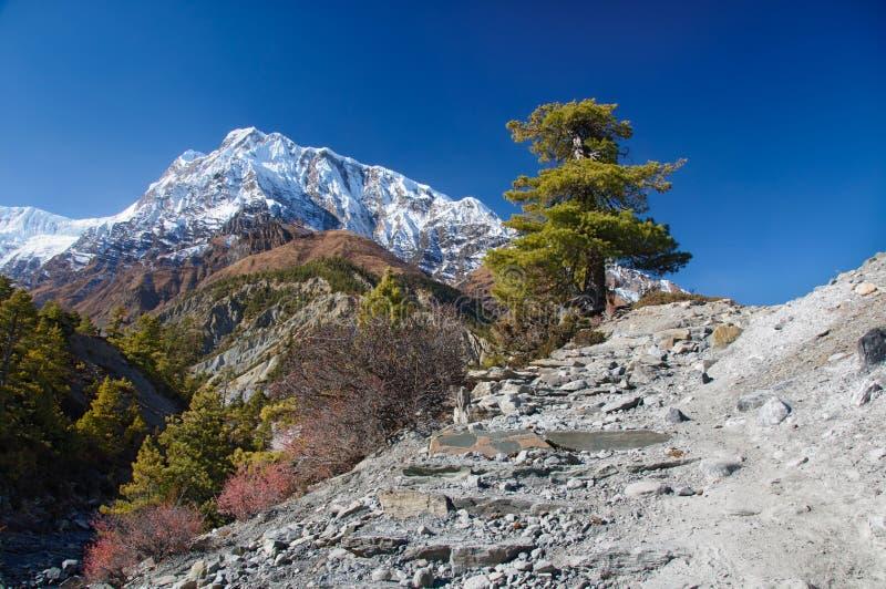 Vista na montanha Nepal de Annapurna imagens de stock royalty free