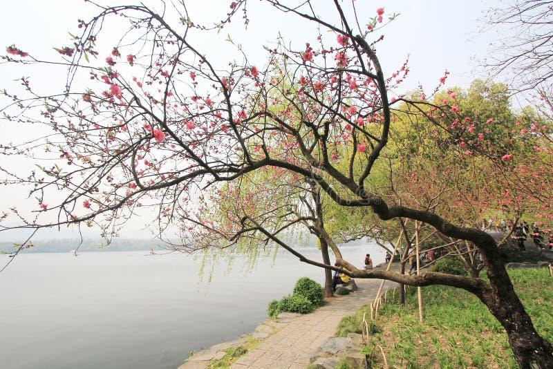 Vista na paisagem cultural do lago ocidental de Hangzhou imagens de stock royalty free