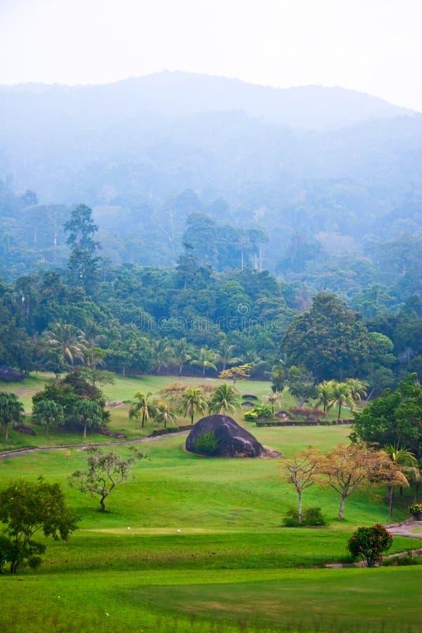 Vista na selva nevoenta imagem de stock