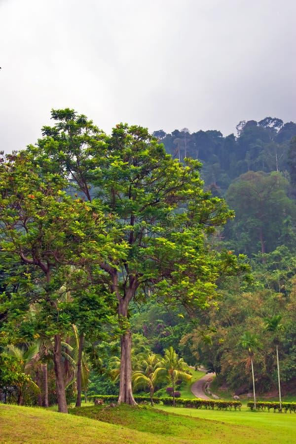 Vista na selva nevoenta fotos de stock royalty free