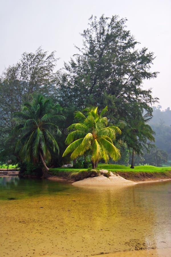 Vista na selva nevoenta imagens de stock