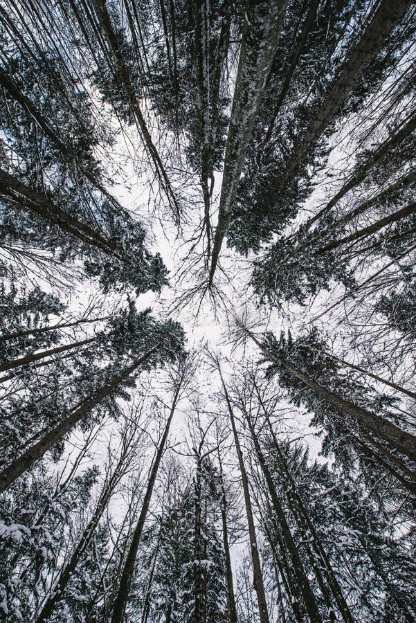 Vista nas árvores acima imagens de stock royalty free