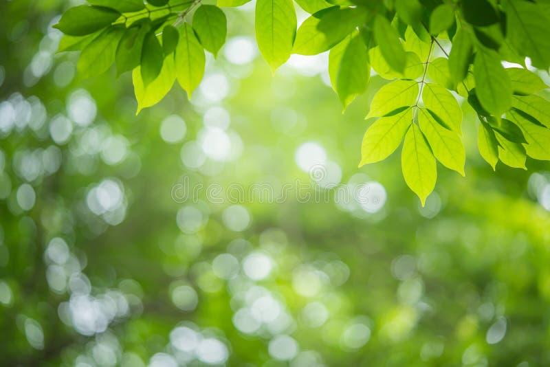 Vista natural de la hoja verde sobre el fondo verde fotos de archivo libres de regalías