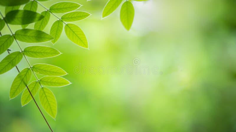 Vista natural de la hoja verde sobre fondo borroso y bokel imagen de archivo libre de regalías
