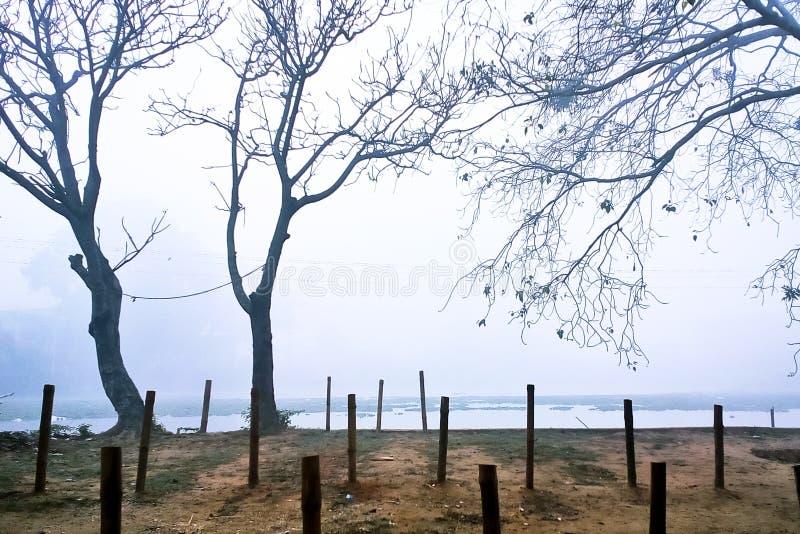 Vista natural de una mañana de niebla del invierno foto de archivo libre de regalías
