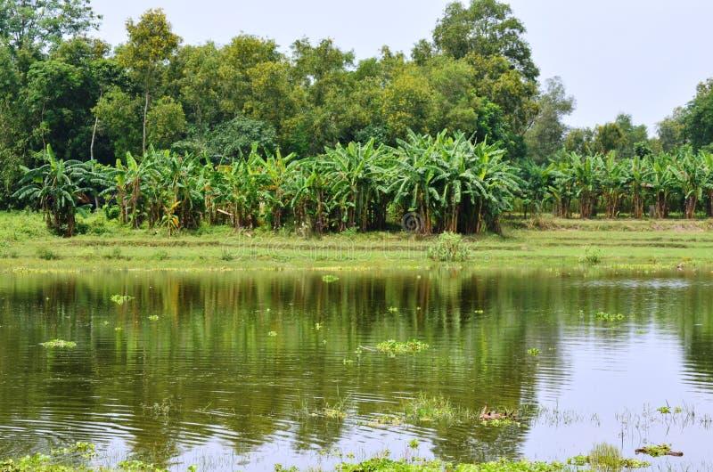 Vista naturale del fiume Bank of Bengal fotografie stock