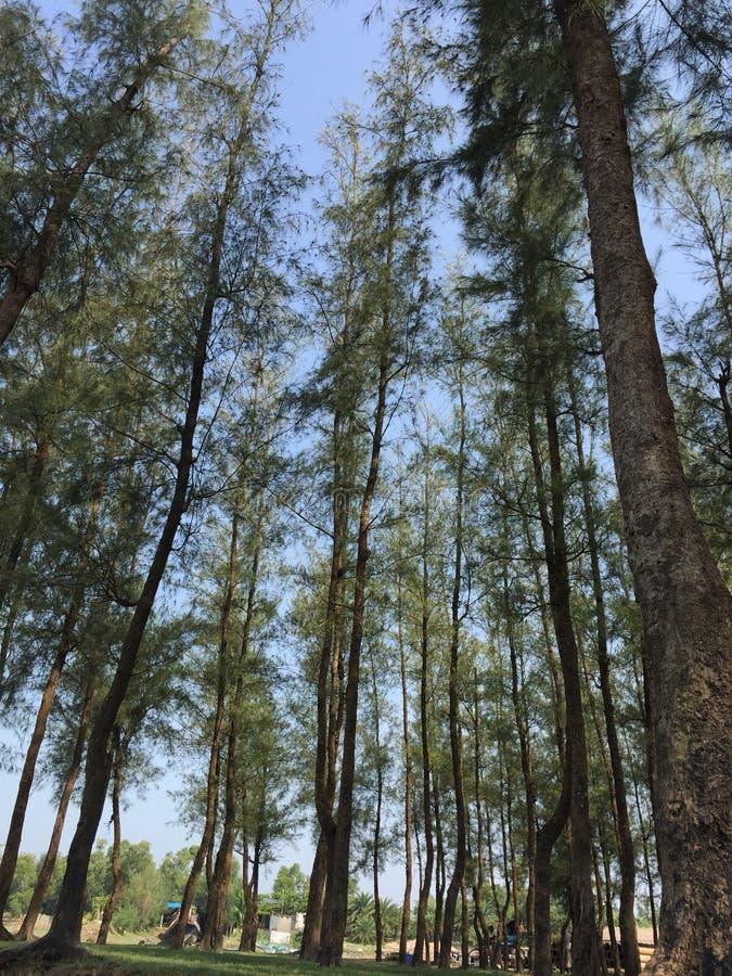 Vista naturale della foresta della mangrovia fotografie stock libere da diritti