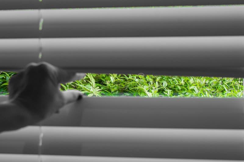 Vista naturale di immagine astratta dalla mano della donna che prende un picco attraverso i ciechi di finestra fotografie stock