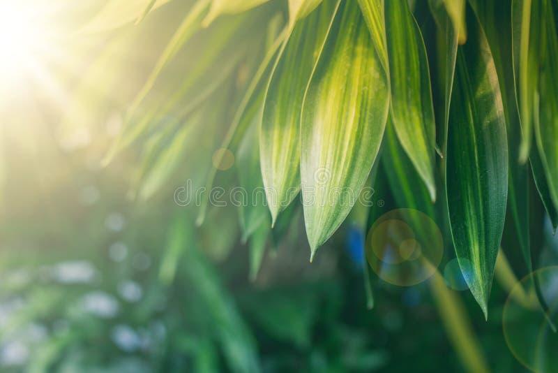 Vista naturale verde della fine sulle foglie verdi in giardino con luce solare di mattina immagini stock libere da diritti