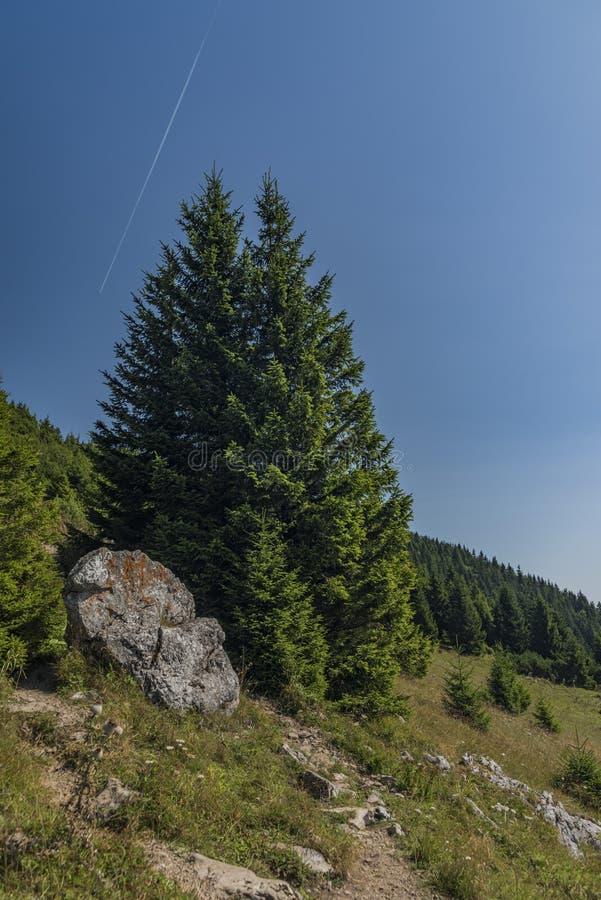 Vista nell'area di Velky Choc in montagne della Slovacchia fotografia stock libera da diritti