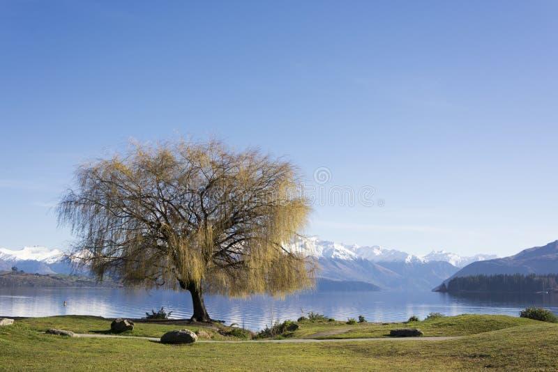 Vista no lago bonito Wanaka, região de Otaga, Nova Zelândia no inverno atrasado, mola adiantada O ar é torrado, a água está frio fotos de stock royalty free