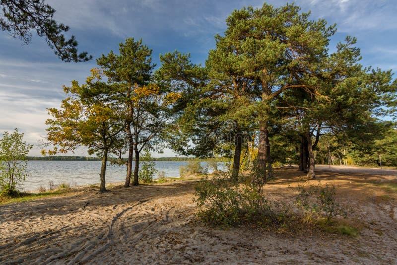 Vista no lago perto da floresta do pinho cedo na manhã no outono fotos de stock royalty free