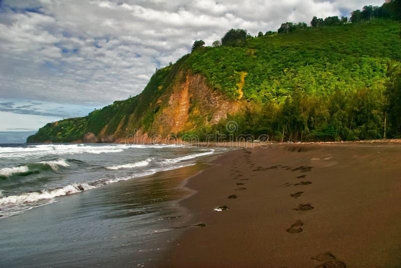 Vista no oceano e na selva foto de stock