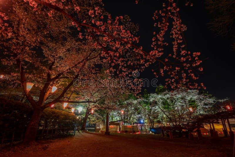 Vista nocturna de las flores de cerezo de la plena floración en el castillo de Ueda en Nagano fotografía de archivo libre de regalías