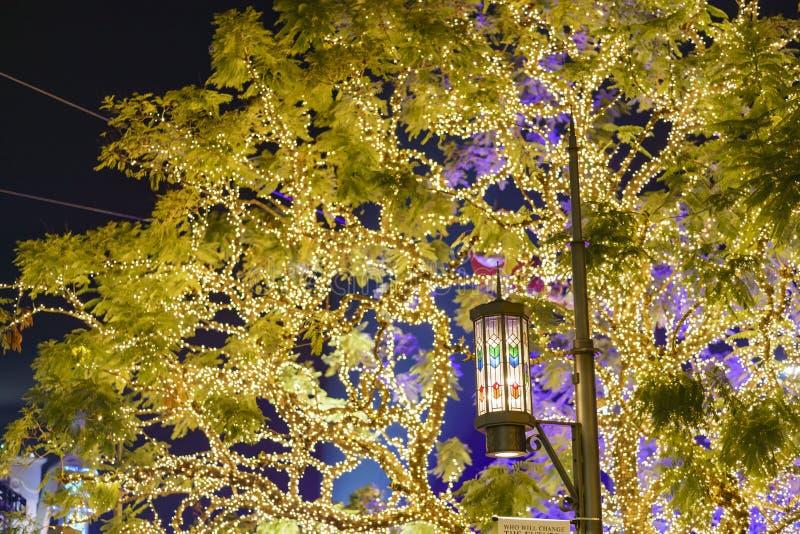 Vista nocturna de las luces de la Navidad hermosas de la arboleda fotos de archivo libres de regalías
