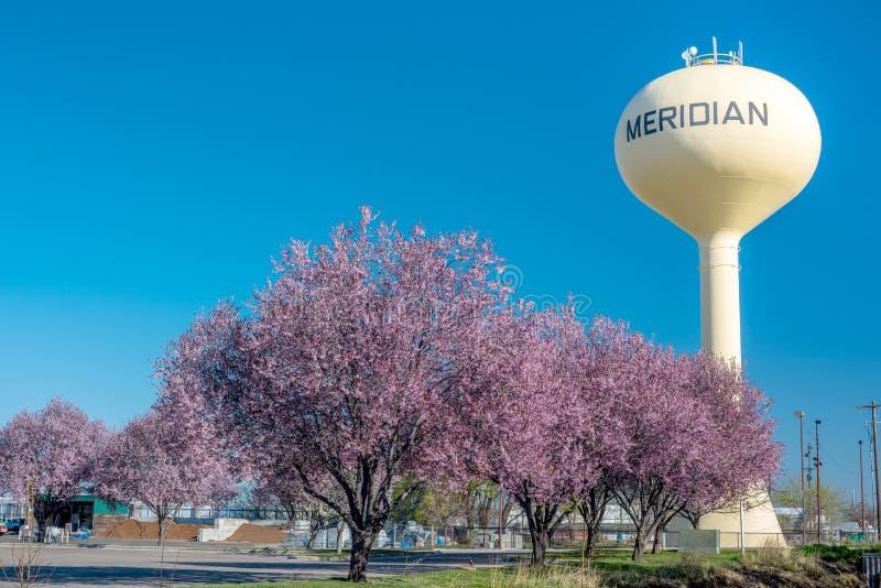 Vista original da torre de água famosa em Idaho meridiano com as árvores de florescência da mola imagem de stock royalty free