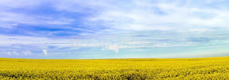 Vista panorámica amplia hermosa del campo de la colza foto de archivo libre de regalías