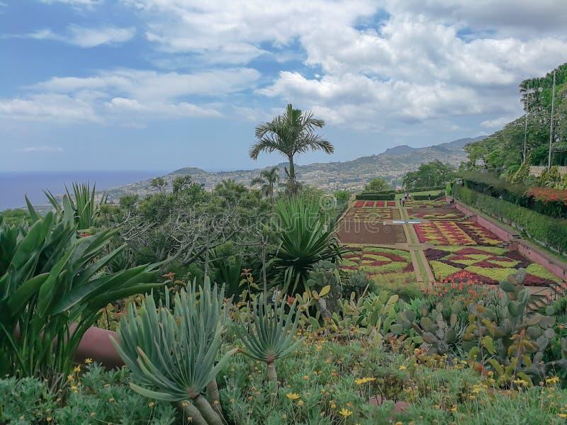 Vista panorámica de Funchal y de plantas coloridas en primavera en la isla de Madeira imágenes de archivo libres de regalías