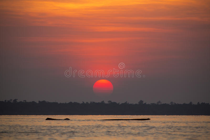 Vista panorámica de la puesta del sol y del árbol muerto flotante en el lago foto de archivo libre de regalías