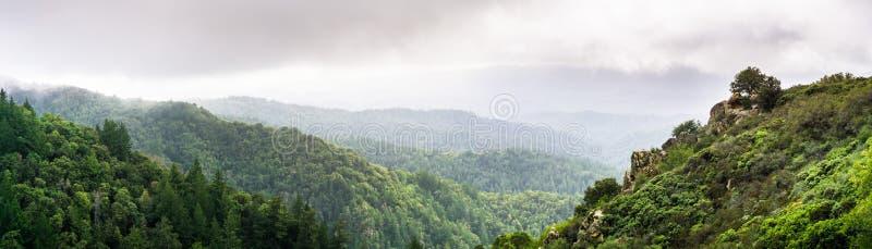Vista panorámica de las colinas y de los barrancos cubiertos en árboles imperecederos en un día de niebla foto de archivo libre de regalías