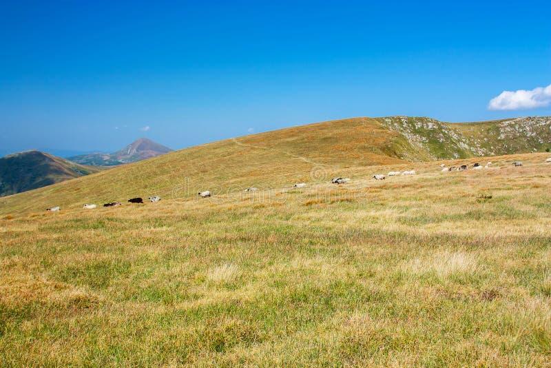 Vista panorámica de las montañas rocosas de los Cárpatos, Ucrania imágenes de archivo libres de regalías