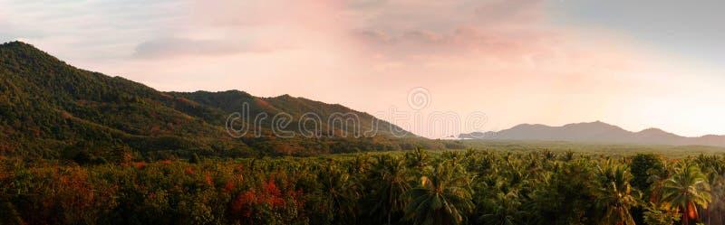 Vista panorámica de las montañas y del bosque tropical hermoso en el verano en que la luz de la tarde golpea la montaña dando por imágenes de archivo libres de regalías