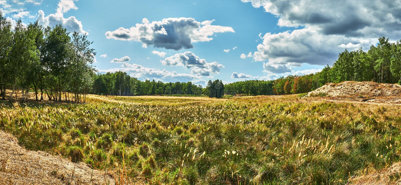 Vista panorámica de un prado salvaje delante de un bosque por debajo un cielo nublado leve en el verano en el campo alemán fotografía de archivo libre de regalías