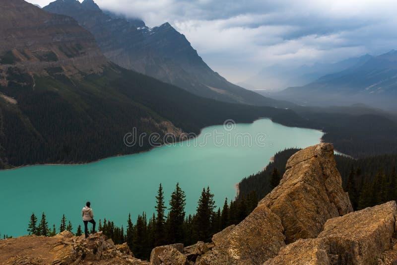Vista panorámica del lago Peyto de la turquesa con las montañas circundantes y del bosque en el valle durante día de verano so fotografía de archivo