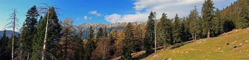 Vista panorámica hermosa de las montañas de Piatra Craiului fotografía de archivo