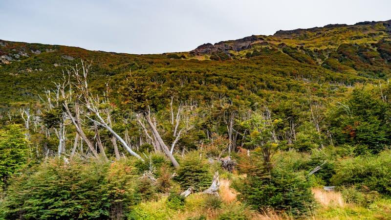 Vista panorâmica da floresta colorida mágica do conto de fadas em Tierra del Fuego National Park, canal do lebreiro, Patagonia, A imagens de stock royalty free