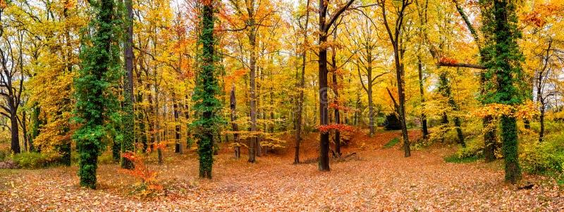 Vista panorâmica da floresta decíduo no outono dourado em Alemanha, imagem de stock royalty free
