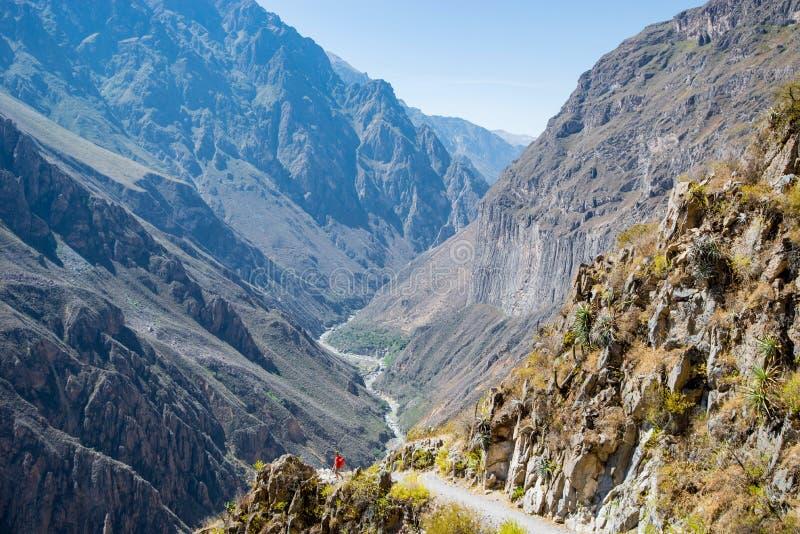 Vista panorâmica da garganta peruana Colca, Peru imagens de stock