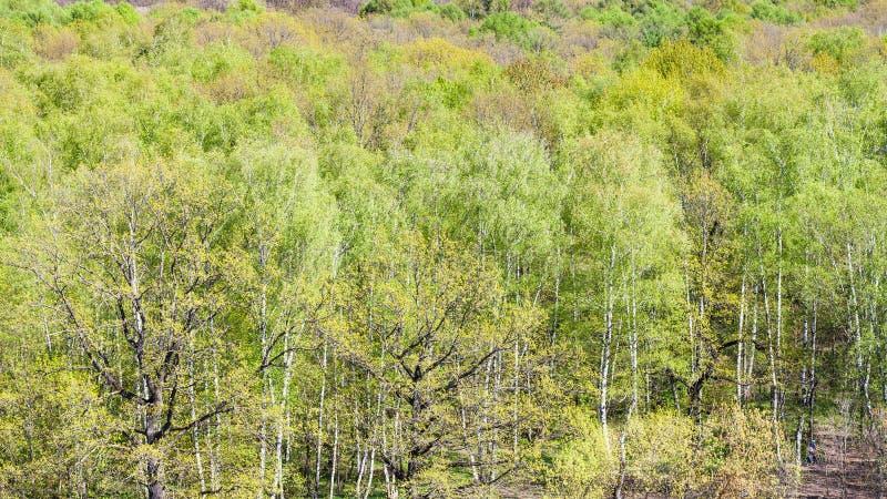 Vista panorâmica de árvores verdes no parque na mola fotografia de stock royalty free
