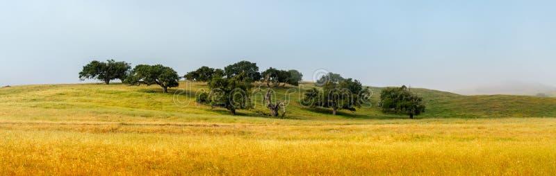 Vista panorâmica de carvalhos velhos bonitos com pasto de cerco imagem de stock royalty free
