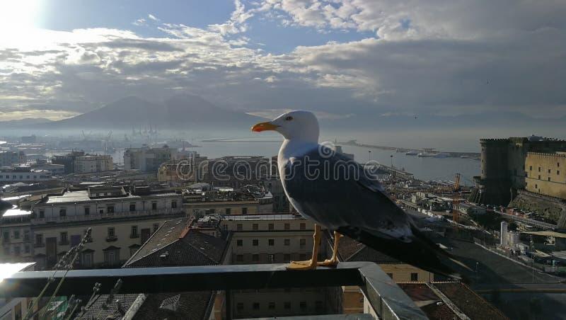Vista panorâmica de Nápoles e de Vesuvio volcan imagem de stock royalty free