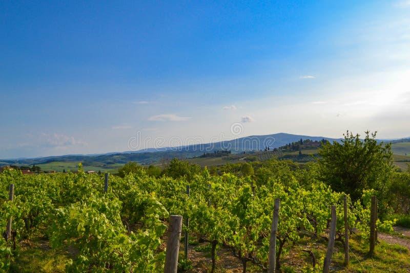 Vista panorâmica de um vinhedo no campo de Tuscan fotografia de stock royalty free