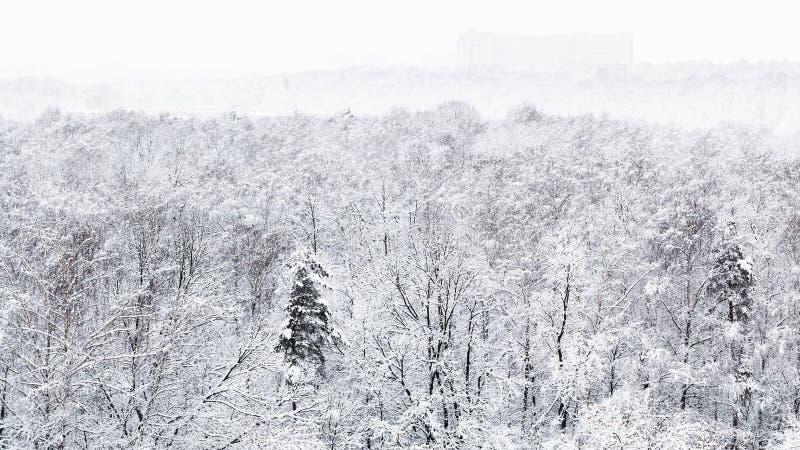vista panorâmica do parque urbano coberto de neve fotografia de stock royalty free