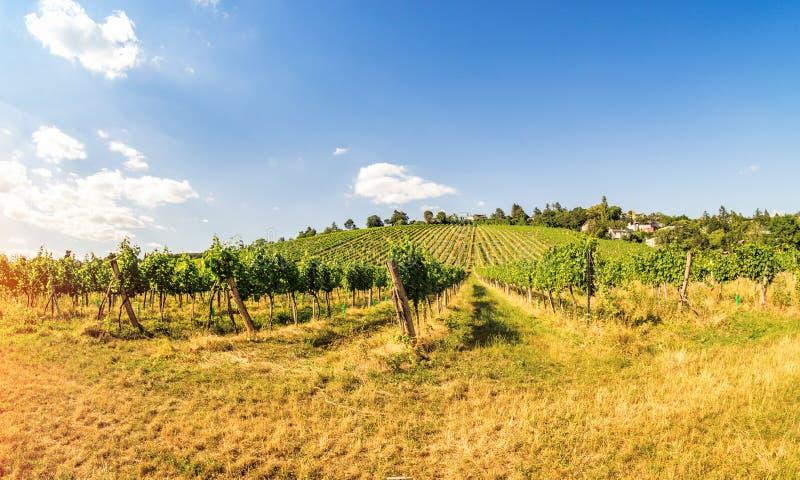 Vista panorâmica dos vinhedos em Áustria Viena fotografia de stock royalty free