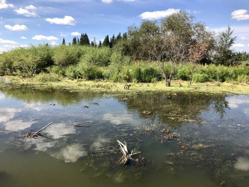 Vista panorâmica no lago Astotin de parque nacional da ilha dos alces em Alberta fotos de stock royalty free