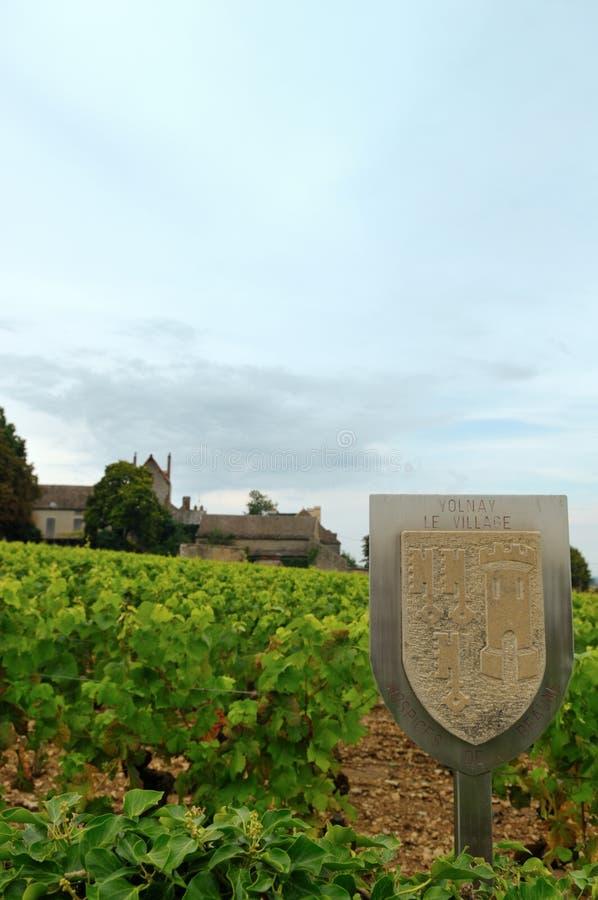 Vista panorâmico de um vinhedo fotografia de stock royalty free