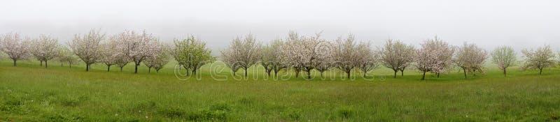 Vista panoramica con gli alberi da frutto di fioritura immagine stock libera da diritti