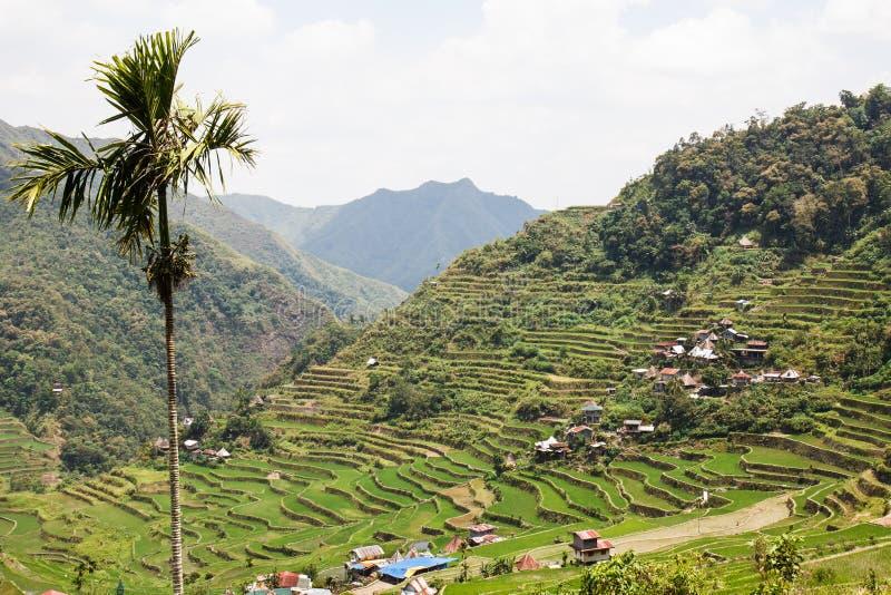 Vista panoramica dei terrazzi del giacimento del riso di Batad, provincia di Ifugao, Banaue, Filippine fotografie stock libere da diritti
