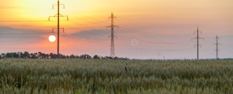 Vista panoramica del giacimento di grano e linea elettrica ad alta tensione contro lo sfondo del tramonto arancio immagini stock libere da diritti