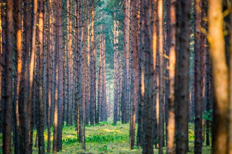 Vista panoramica della foresta fotografia stock