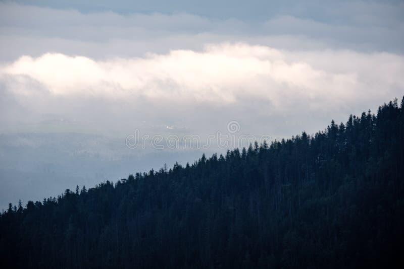vista panoramica della foresta nebbiosa in montagne carpatiche occidentali fotografia stock libera da diritti