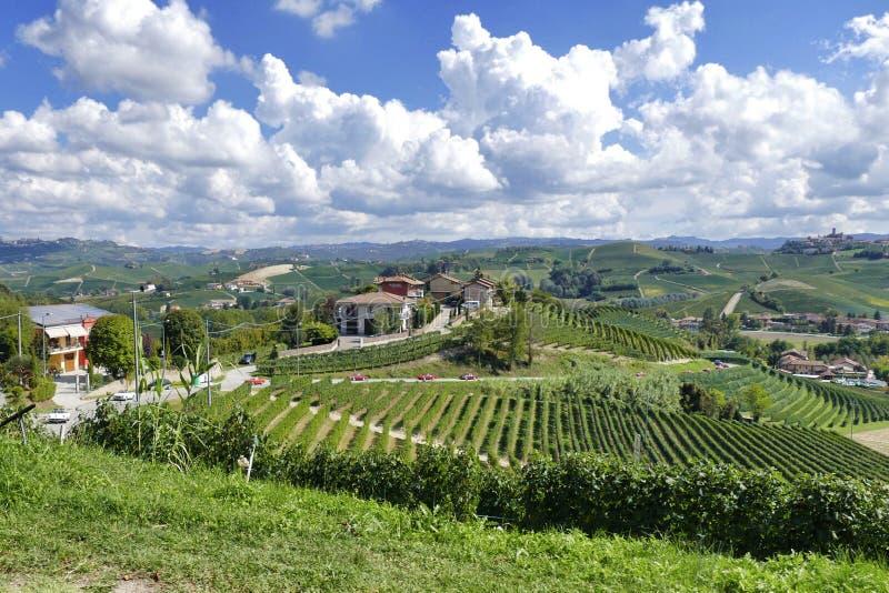 Vista panoramica della vigna durante il giro enologico in Langhe che conduce le automobili d'annata italiane del ragno fotografia stock libera da diritti