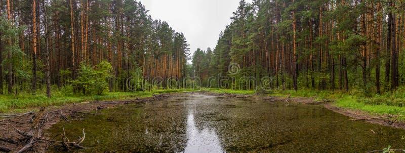 Vista panoramica di piccolo lago nella foresta vicino alla cava di pietra del talco nella regione di Sverdlovsk fotografie stock