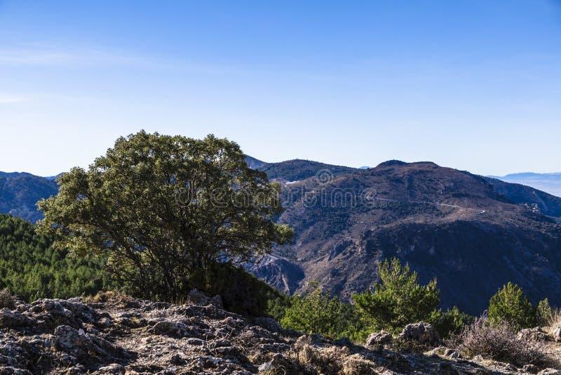 Vista panoramica di Sierra Nevada, Spagna, con le montagne e l'albero immagini stock libere da diritti